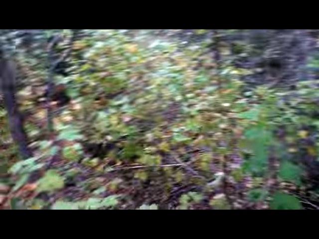 Mongo Solo Archery Elk Hunting POV Video - Bow Hunting Rut Bulls - Self Filmed id