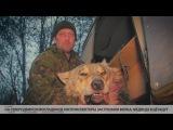 На северодвинском кладбище охотинспекторы застрелили волка, медведя ещё ищут // ...