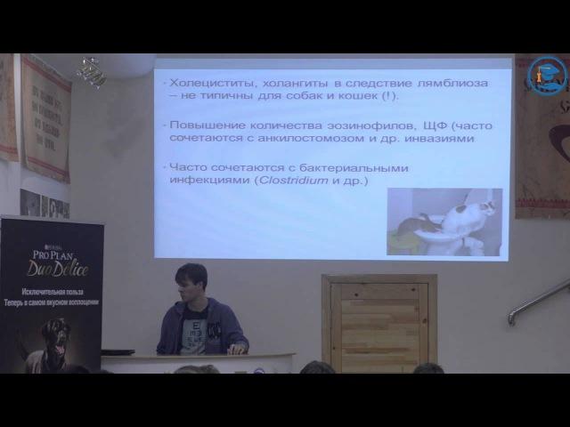 «Лямблиоз кошек и собак», С. В. Коняев