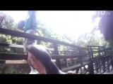 Бегемоты любят арбузики