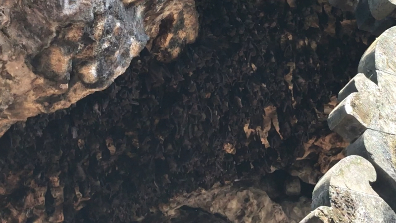 Pura Goa Lawah или Храм летучих мышей 🦇🦇🦇