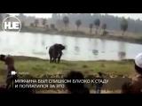 В Индии слон затоптал насмерть мужчину