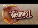Самые странные животные в мире  Worlds Weirdest Animal Faces