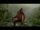 I Like To Move It - Monkey Dance.mp4