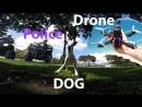 Собаки и Дроны запрещены в парке! :)