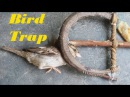 How To Catch A Bird Using Spring Trap | Awesome Quick Bird Trap In Action