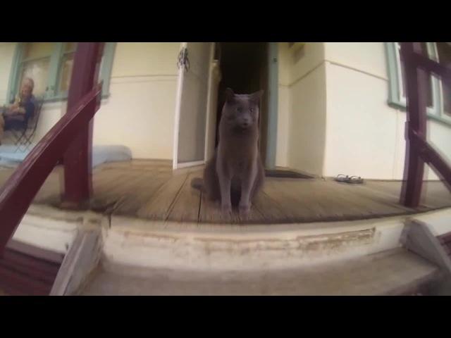 Cat Boop
