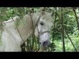 Белая лошадь White horse