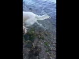 Dog saves deer from drowning in harbor