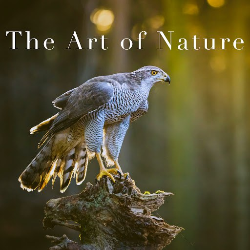 Rain альбом The Art of Nature