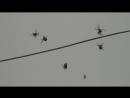 Chovendo Aranhas - It's raining spiders, man!