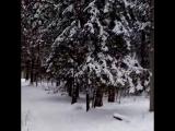 Прогулка по лесу!