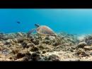 Xiaomi Yi Action Camera - Подводные приключения