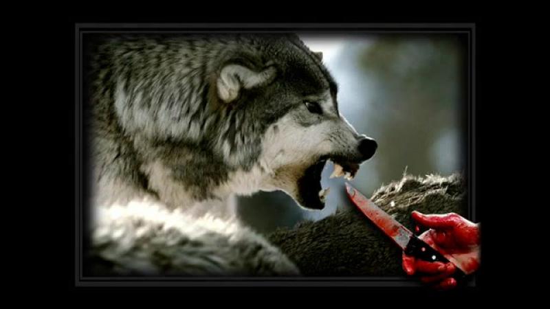 Схватка с волками. Ю.Самарский