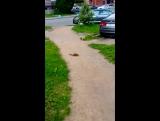 Соседи СПЧ сняли на видео белку