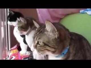 Милая беседа котеек