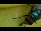 BBC.Madagascar.02.2011