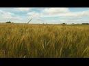Ksenof_ont video