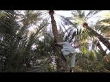 Путешествие по автодорогам Объединенных Арабских Эмиратов – 8 городов за 7 дней