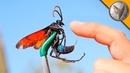 УЖАЛИЛА ТРОПИЧЕСКАЯ ОСА.Укус тарантулового ястреба.Brave Wilderness на русском