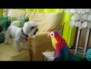 Dog vs. Parrot barking contest