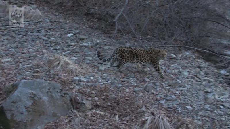 Земля леопарда. Карусель жизни