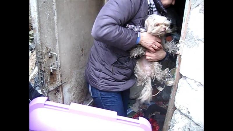 О чём говорят волонтеры. Спасение собак из бомжатника