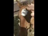 Сегодня знакомился с лошадьми. Они такие милые