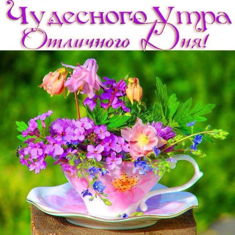 Открытки доброе утро прекрасного дня внесения красота летние, апреля прикол