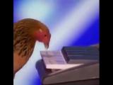 Маэстро, американский гимн пожалуйста))