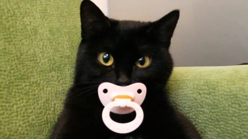 Приколы с кошками и котами 4 Подборка смешных и интересных видео с котиками и кошечками