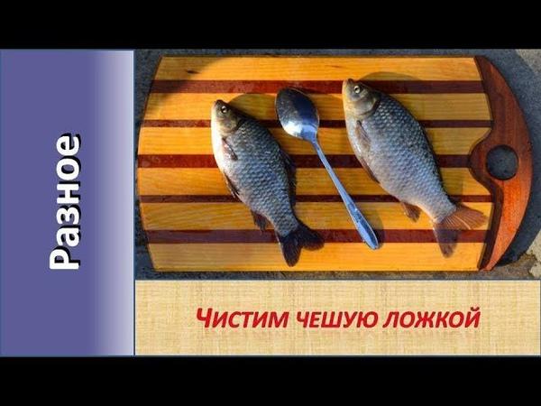 Как быстро почистить рыбу от чешуи сохраняя порядок на кухне Чистим рыбу столовой ложкой