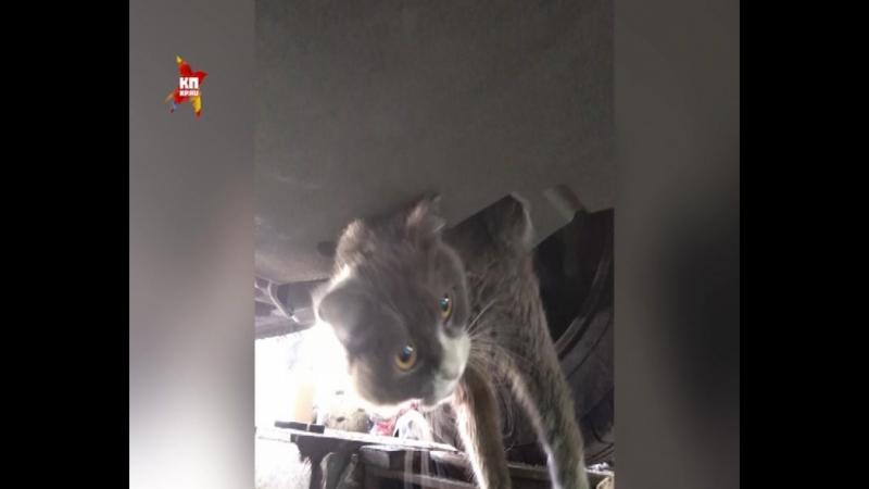 Кот автостопщик из Самары проехал больше 300 км