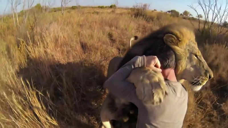GoPro- Lions - The New Endangered Species (online-video-cutter.com) (1)