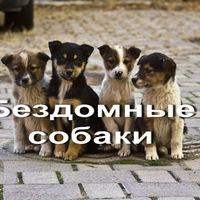 Приют пес и кот улан-удэ