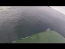 Встреча с дельфинами в Териберке.