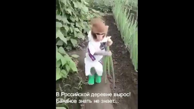 в российской деревне вырос, бананов знать не знает