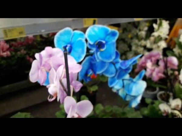 Мега быстрый обзор орхидей.Касторама.Электросталь.Большая уценка орхидей.