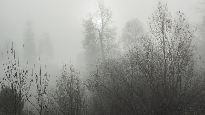 18 04 13 Малыгин Мандельштам Дум туманный перезвон