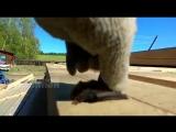 Летучая мышь в Амге