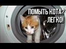Приколы про кошек кошки и вода / Интересные факты о кошках