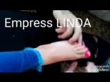 الملكة ليندا اللبنانية16