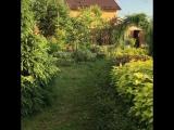 Прогулки по саду.3