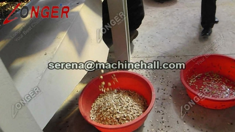 Pumpkin Seed Shelling Processing Machinery Working Video