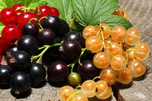 Простые способы повысить урожайность смородины.