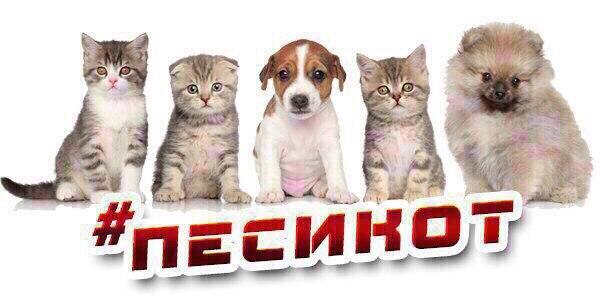 #песикот@priznavashki  Если вы ПОТЕРЯЛИ/НАШЛИ питомца или же хотите ОТ