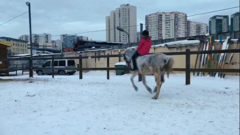 Слишком много фейлов🔥 Или история о том, как Вика не погоняла коня на корде перед тренировкой 🔥