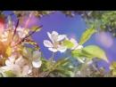 Южно Сахалинск калада Радмила Можлаеваныҥ кӱӱлик эҥири бийик кеминде ӧтти Сахалин ичинде јадып турган алтай албаты јаан быйаны