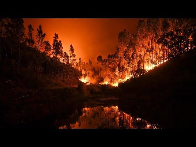 Сильнейшие лесные пожары в Португалии: 62 погибших (новости) » Freewka.com - Смотреть онлайн в хорощем качестве
