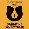 Группа помощи животным «Забытые животные» Пушок